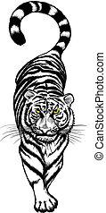 tiger, hvid, sort, crouching