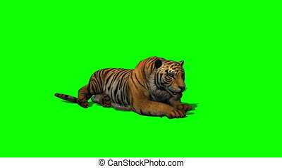 tiger idle on green screen