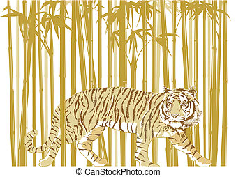 tiger, in, bambu skog