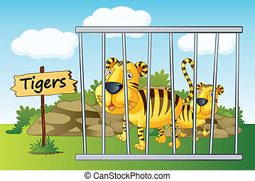 tiger in cage - illustration of a tiger in cage and wooden...