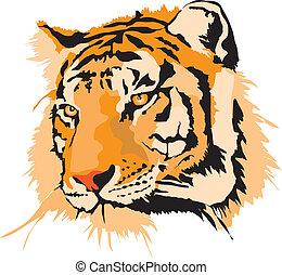 tiger- kopf