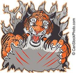 tiger, mascotte, het scheuren, mal, uit
