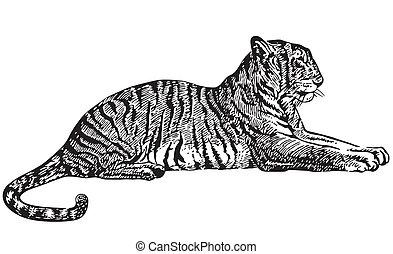 tiger, mentindo