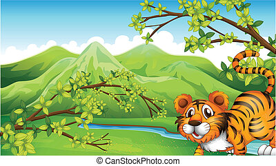 tiger, montagna, vista posteriore