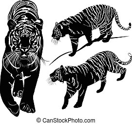 tiger, neposkvrněný, vektor, čerň
