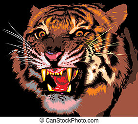 tiger of the jungle on the black background