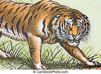 Tiger on Currency Note