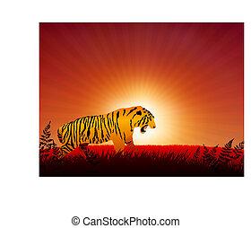 tiger on sunset internet background