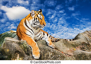 Tiger on the sky background
