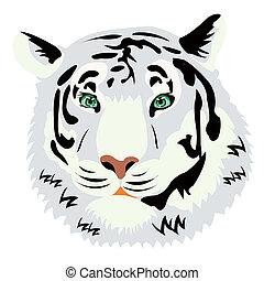 tiger, porträt, weißer hintergrund