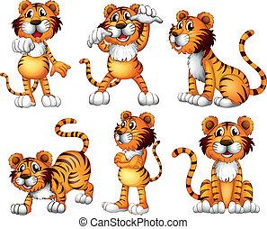 tiger, pozycje, sześć