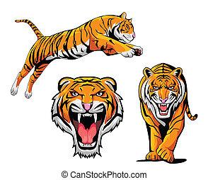 tiger, sæt, illustration