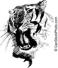 tiger, schizzo, vettore, gnarling