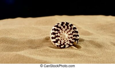 Tiger sea shell with sand on black, back light, rotation