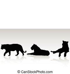 tiger, silhouett, vektor, tre, bengalen