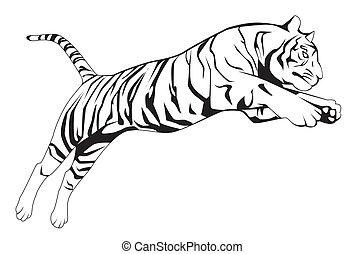 tiger, springen