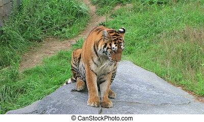 Tiger Stretching