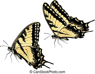Tiger Swallowtail Butterfly - Black yellow tiger...