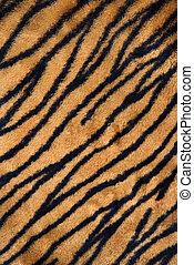 tiger tryck, carpet.