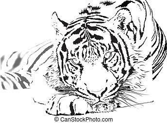 tiger relaxing and staring at camera