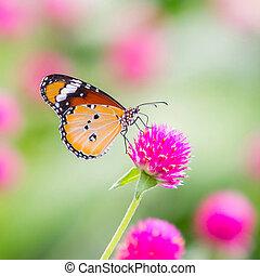 tiger, vlakte, vlinder