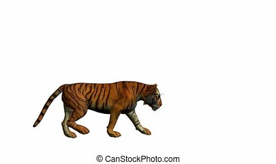 Tiger Walking - Tiger walking on a white background