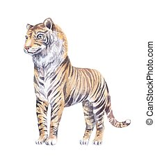 tiger watercolor vector  illustration, isolated on white