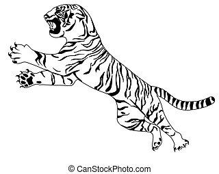 tiger, weißes