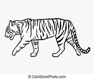 Tiger wild animal sketch vector - Tiger wild animal vector....