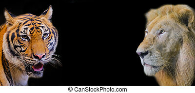 Tiger with Lion on black background
