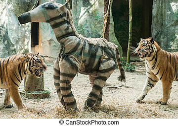 tiger, zabawka, wzbogacenie, ogród zoologiczny