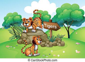 Tigers near the wooden arrow