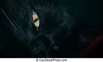 Tight shot of a black cat's face