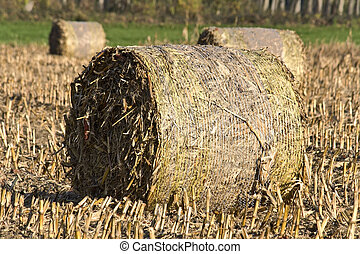 Tightly packed roll of hay on a field