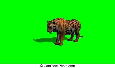 tigre, -, écran, vert, mange
