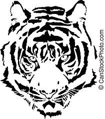 tigre, 11, tête