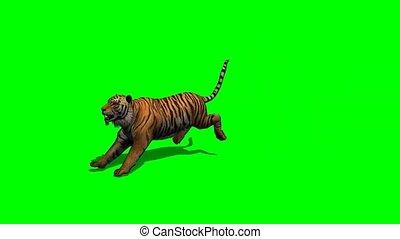 tigre, attac, écran, -, vert