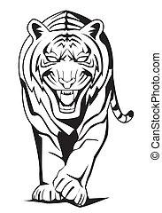 tigre, caminata
