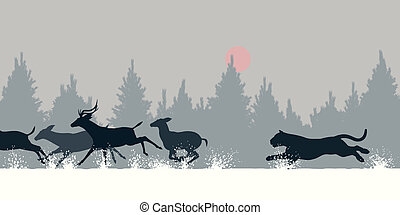 tigre, chasser, cerf
