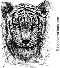 tigre, croquis, blanc