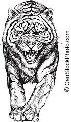 tigre, dessiné, main