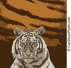 Estampa de tigre para camisetas.