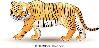 tigre, fond blanc, isolé, illustration