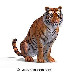 tigre, gato grande