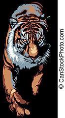 tigre, grand