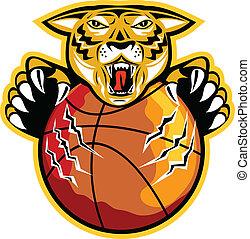 tigre, griffes, boule basket-ball