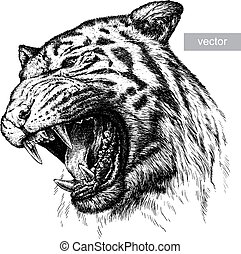 tigre, illustration, graver