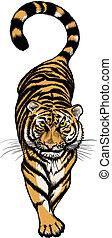 tigre, ilustración, se agachar