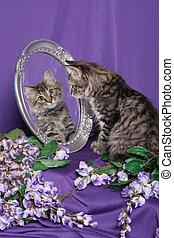 tigre, image, mir, reflété, chaton