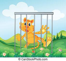 tigre, mis cage